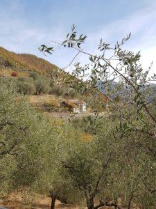 Pieve di Teco, frontiera armoniosa tra uliveto e bosco(Valle Arroscia)
